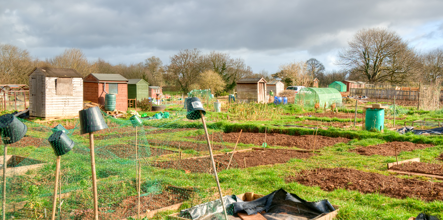 To the Colchester Avenue Allotment Association, This site has a wealth of information for plot-holders of our site in Cardiff as well as lots of gardening and allotment content for everyone.